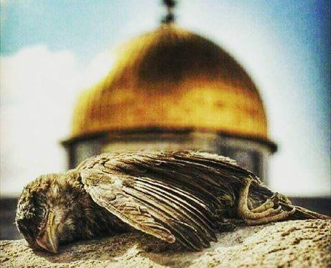 LA HAVLE / Kudüs'ün Gözyaşları